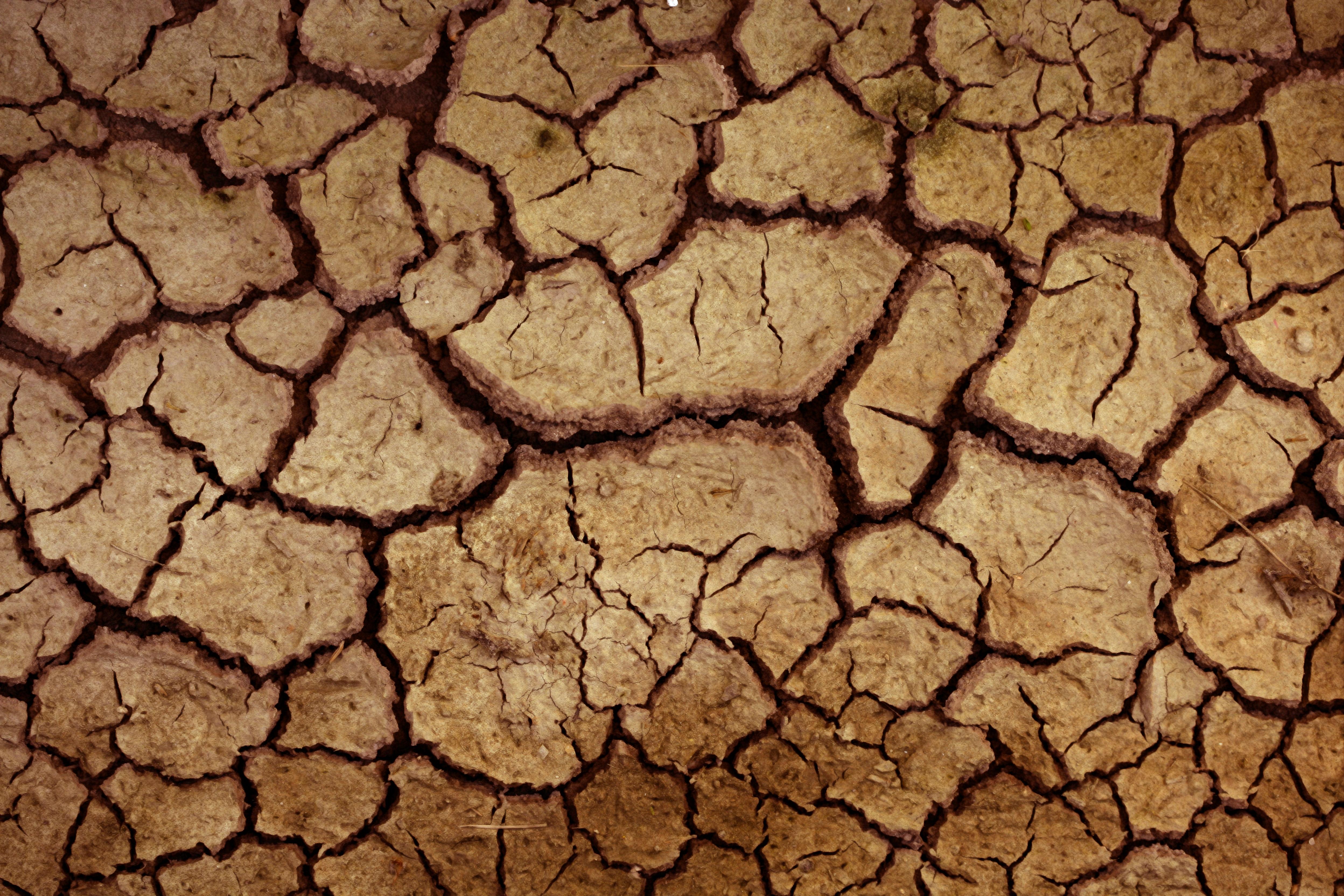 Глинистая почва после дождя покрывается коркой, воздух через такой грунт проходит плохо