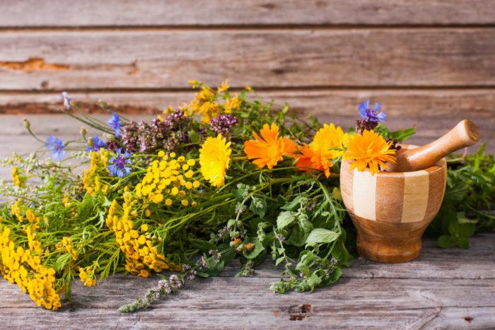Целебные растения полезны во всем, и особенно в создании органического огорода