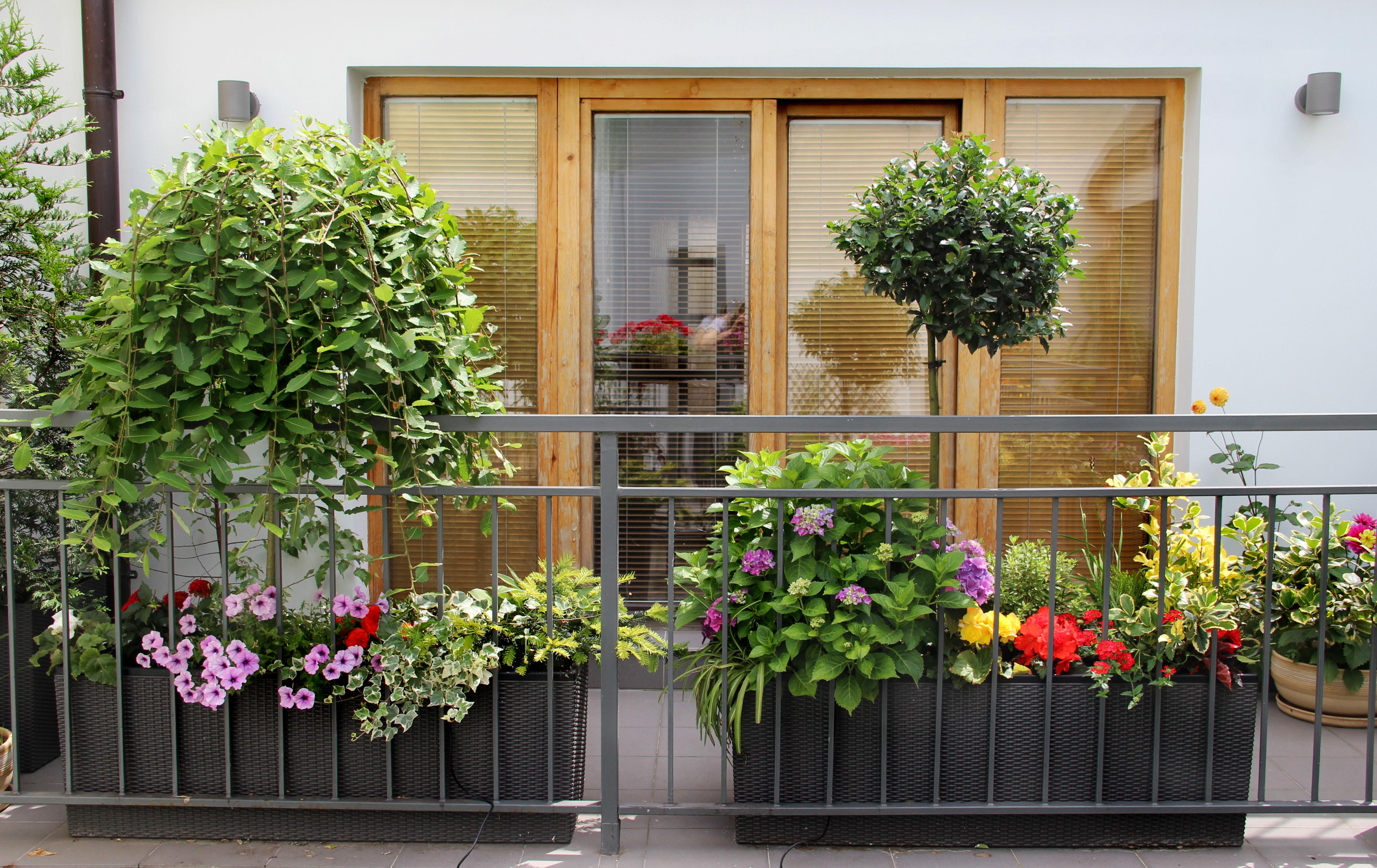 Уход за контейнерными растениями практически такой же, как и за горшечными комнатными, но есть и свои нюансы