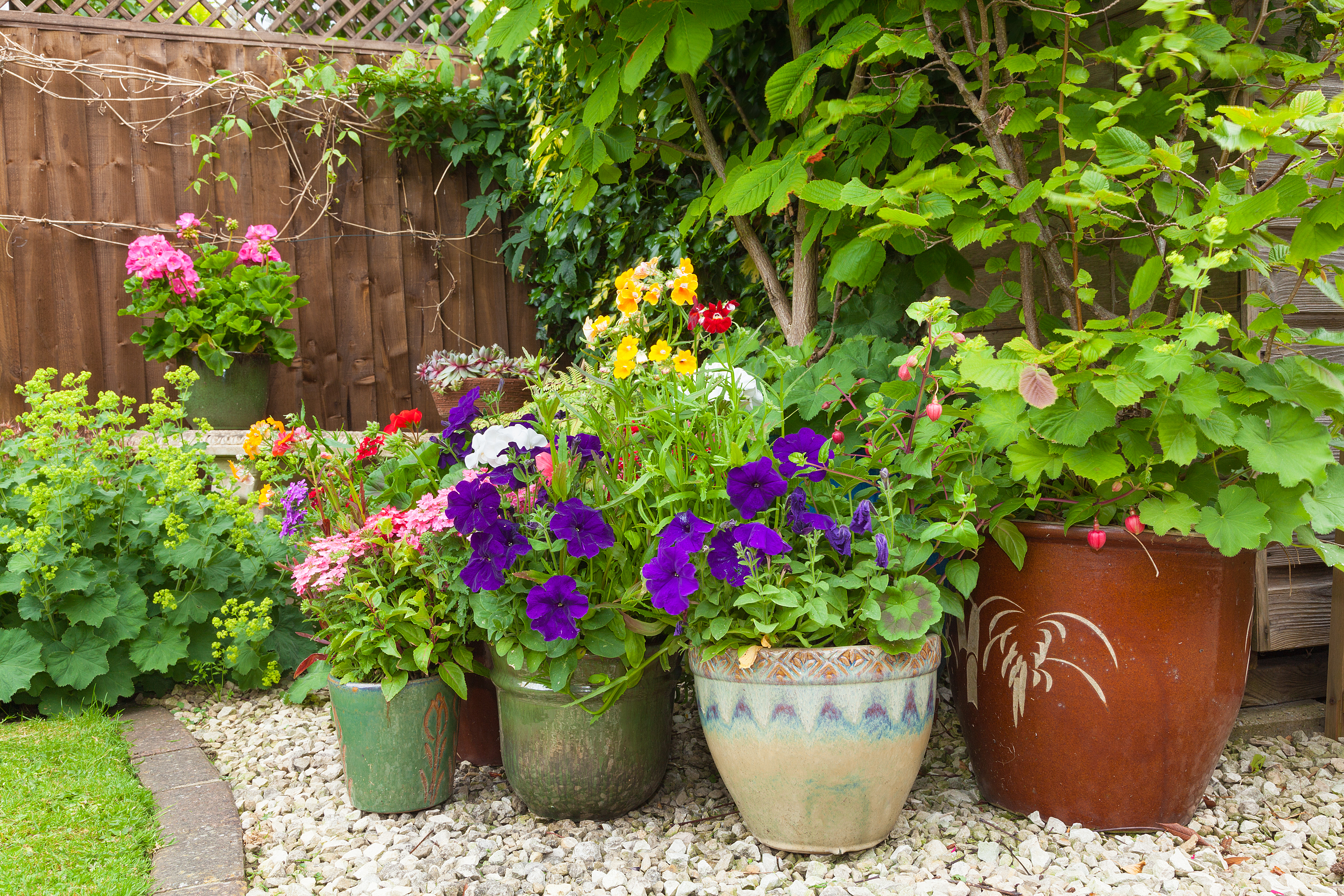 Контейнерные растения решат проблемы ландшафтного рельефа любого сада