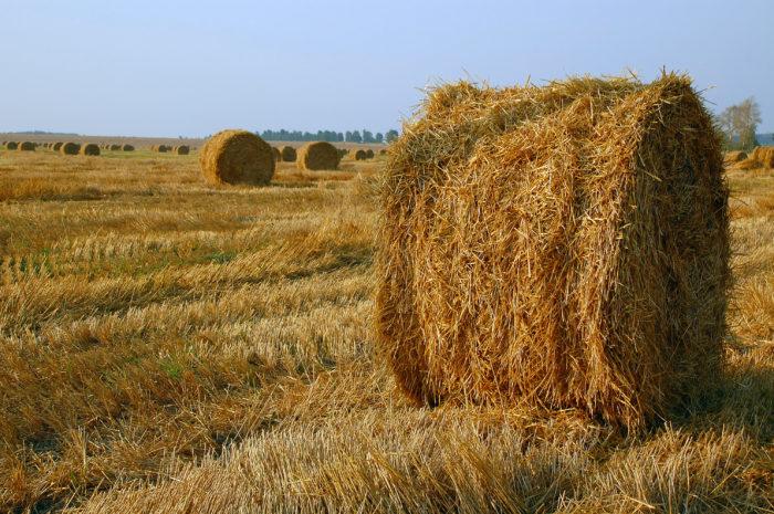 Уборка зерновых в августе - всему венец. В августе берегли каждое зёрнышко, а каждую крошку клали в лепёшку