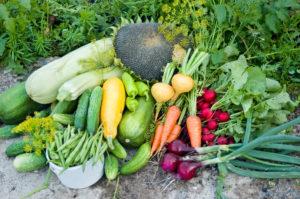 Лунный календарь садовода на август подскажет, какие работы необходимы в последний месяц лета