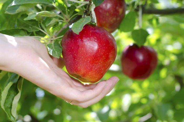В августе празднуют не только Яблочный Спас, но и медовый, и ореховый
