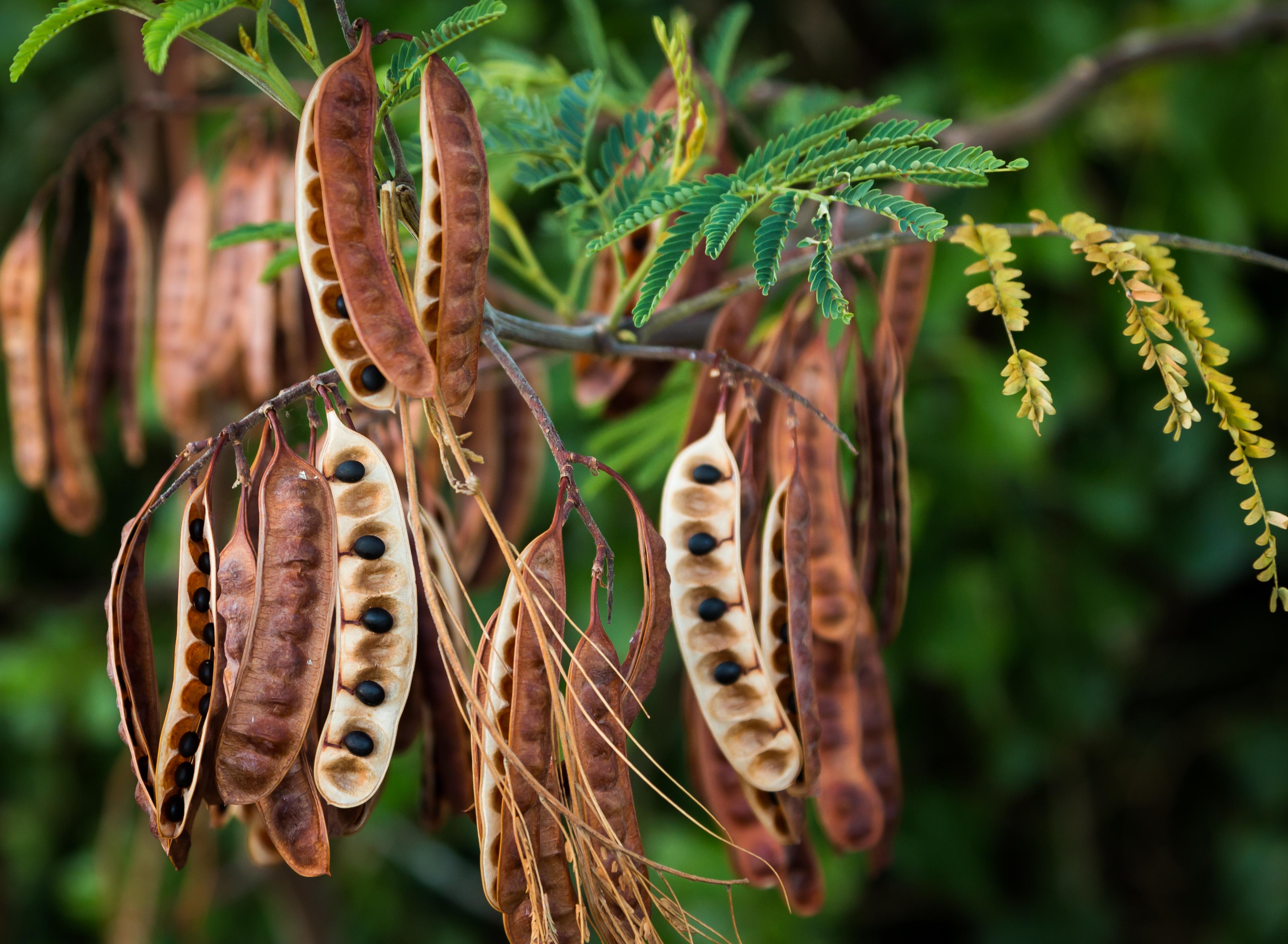 В сентябре начинается сбор семян на долгое хранение