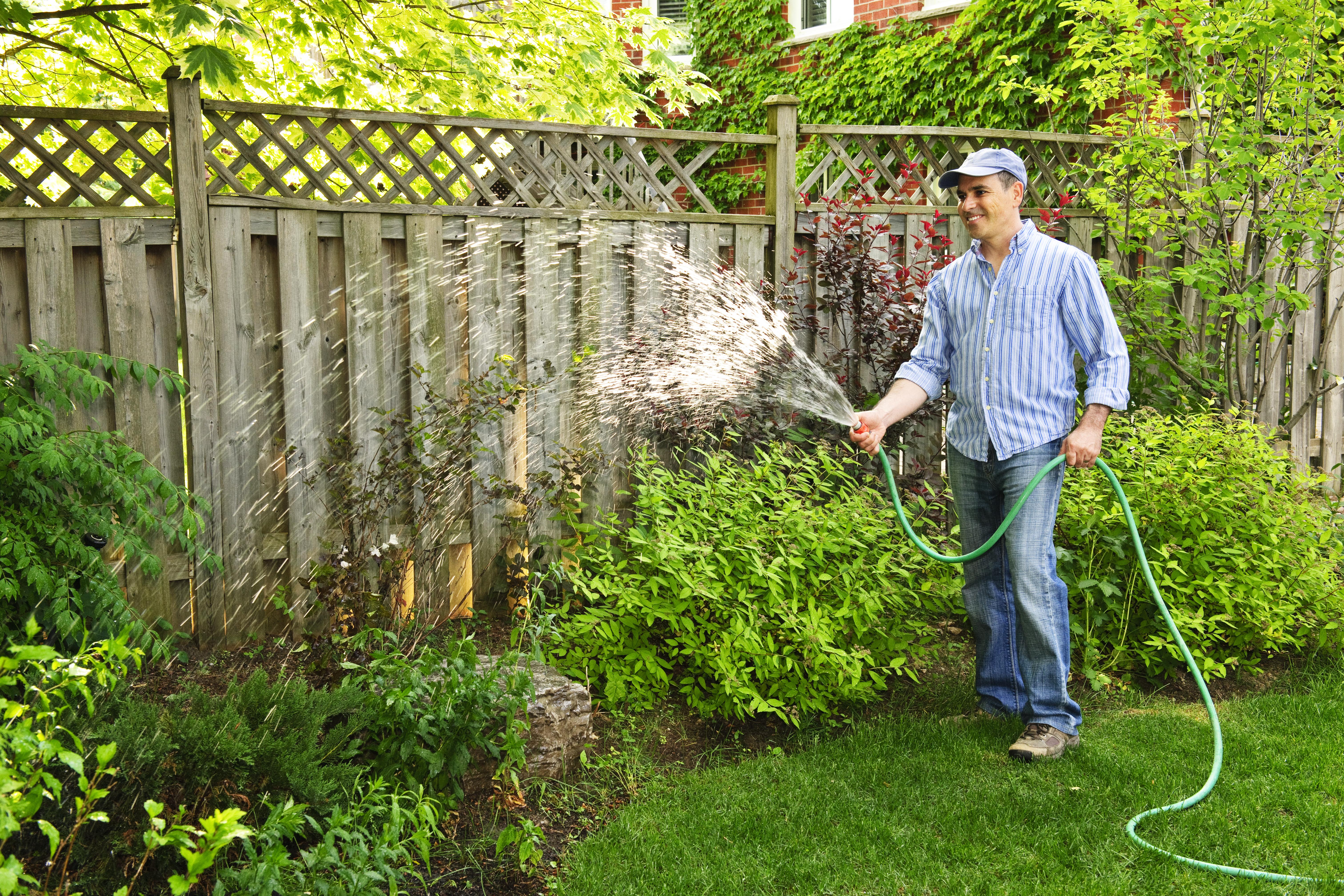 В сентябре проводят влагозарядковый полив для всех деревьев и кустарников