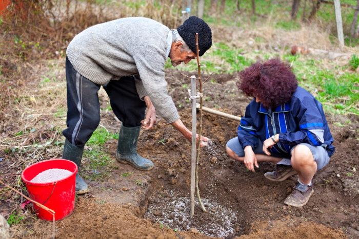 Посадка саженцев очень важный этап при закладке сада