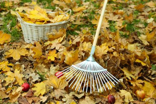 Лунный календарь садовода на октябрь 2018 подскажет об основных работах на приусадебном участке
