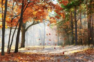 Октябрь называют Листопадом, когда деревья активно сбрасывают листья.