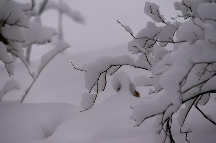 Декабрь - предсказатель зимы, весны и лета