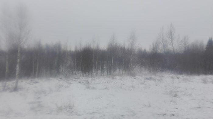 Если в декабре в лесу треск деревьев усиливается, то быть сильным морозам