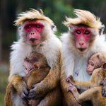 День обезьян 14 декабря