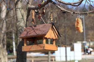 В начале зимы можно озаботиться установкой кормушки и пополнением корма для зимования птиц