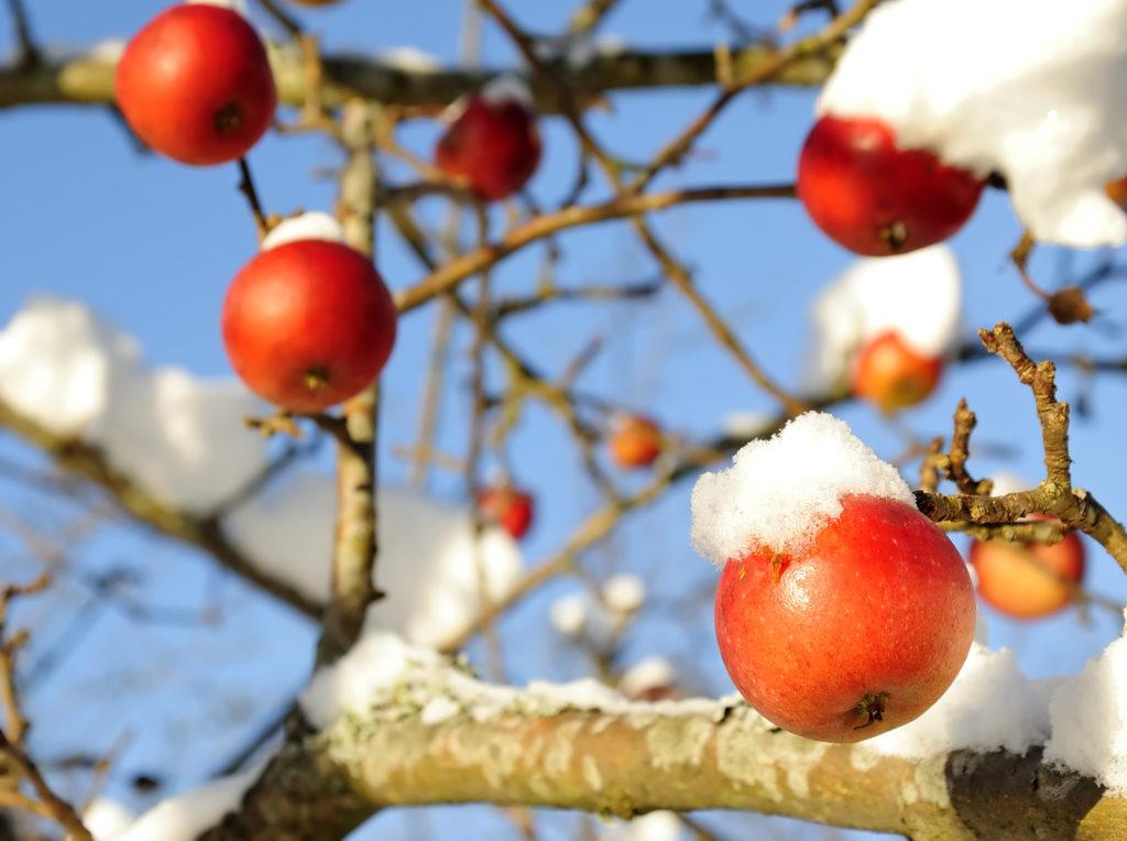 Лунный календарь садовода на декабрь