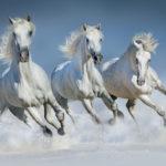 Три белых коня