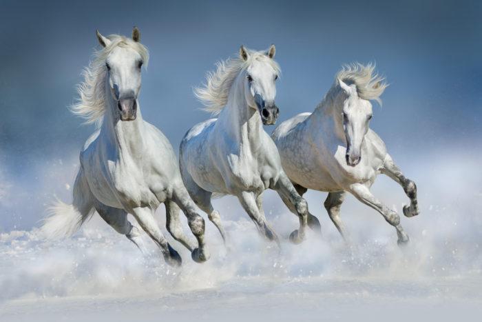 Три белых коня: приметы 4 декабря