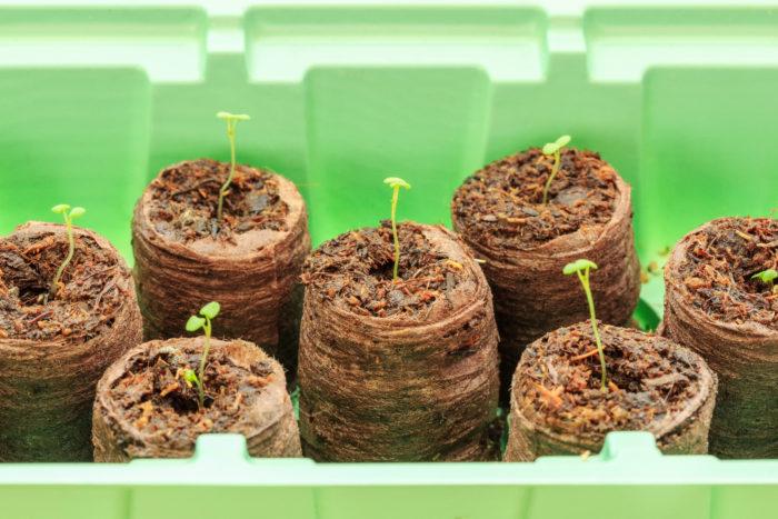 Торфяные таблетки удобны и практичны для выращивания рассады