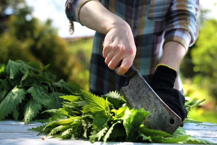 Крапива помогает решить проблему плодородия почвы