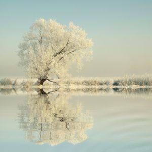 Морозный январь - признак урожайного года