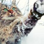 Кошка - главная примета на 26 января