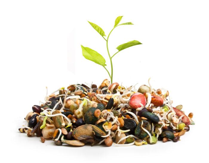 Предпосевная подготовка семян - залог успеха будущего урожая