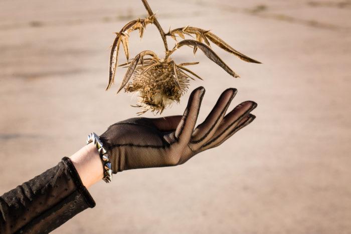 Рука в перчатке и чертополох