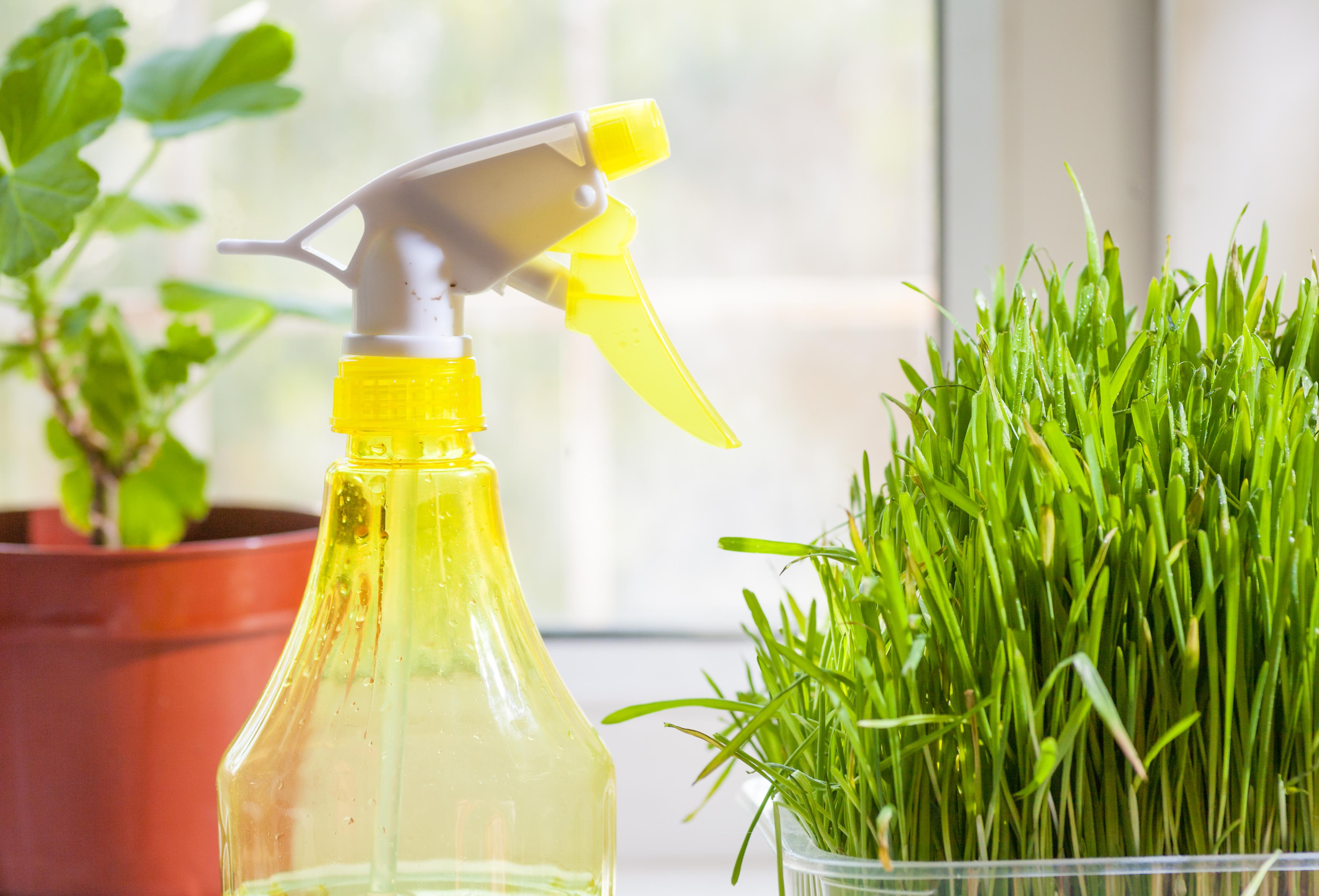 Зимой важно правильно ухаживать за комнатными растениями