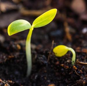 В феврале начинают готовить рассаду для ранней посадки в теплицы