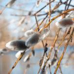 Лунный календарь садовода в марте 2019 поможет спланировать все дела в начале весны