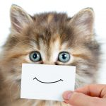 Котик с улыбкой
