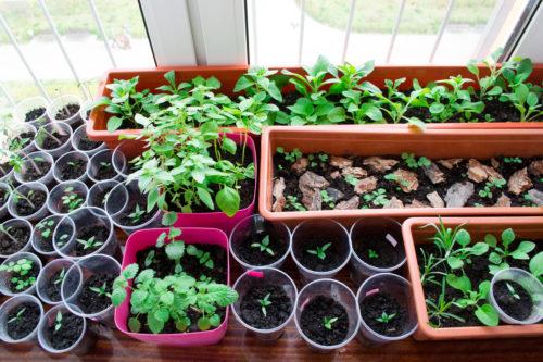 Март - время для посадки рассады всех основных овощных культур