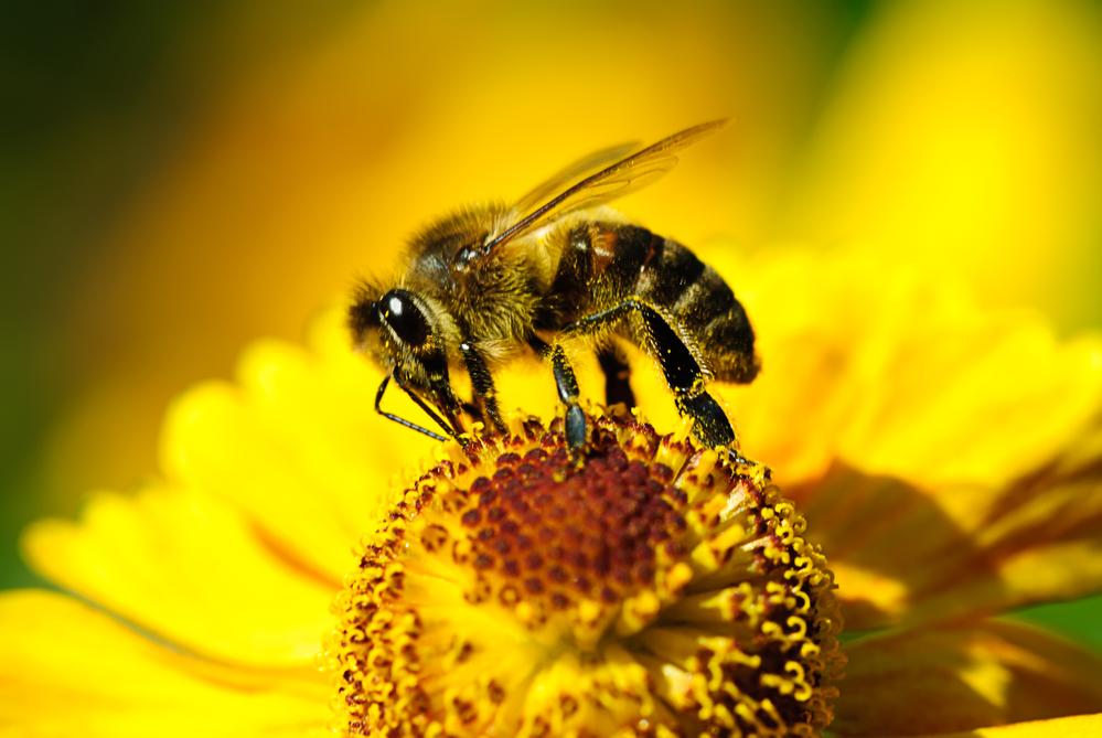 Большинство примет и обрядов в этот день были связаны с пчелами.