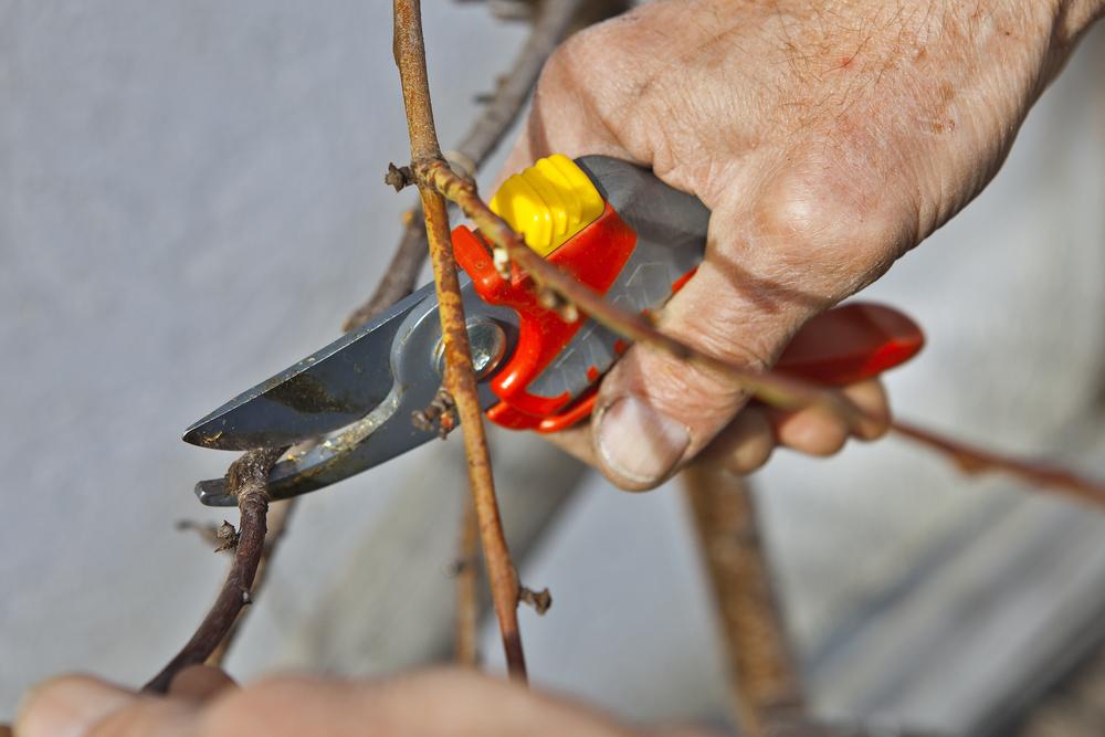 Обрезка деревьев и кустарников - важная работа в саду в мае