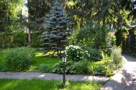Участок Дарьи Донцовой весь в деревьях
