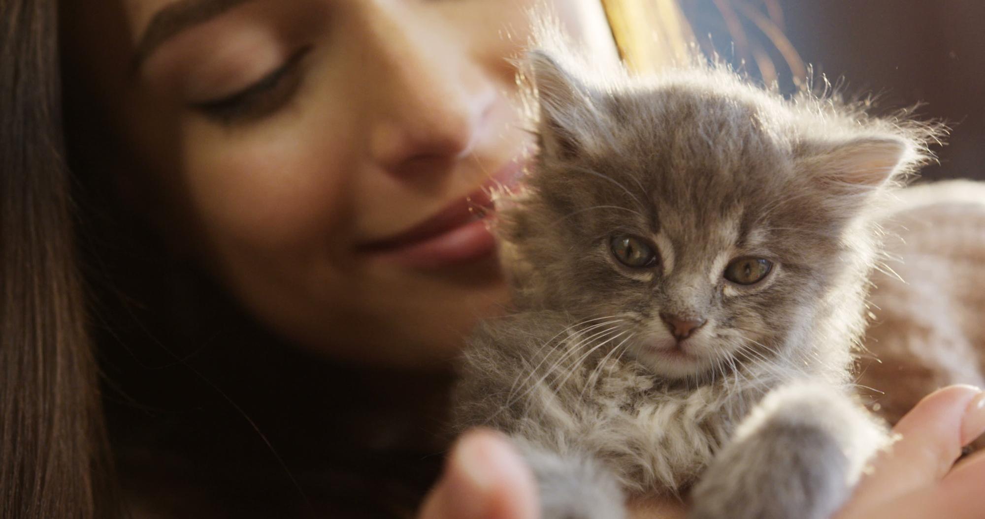 Котик - по приметам на счастье