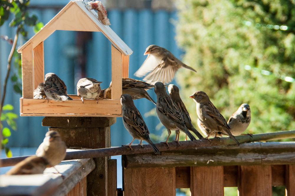 Если хотите привлечь на участок птиц, сделайте для них кормушку