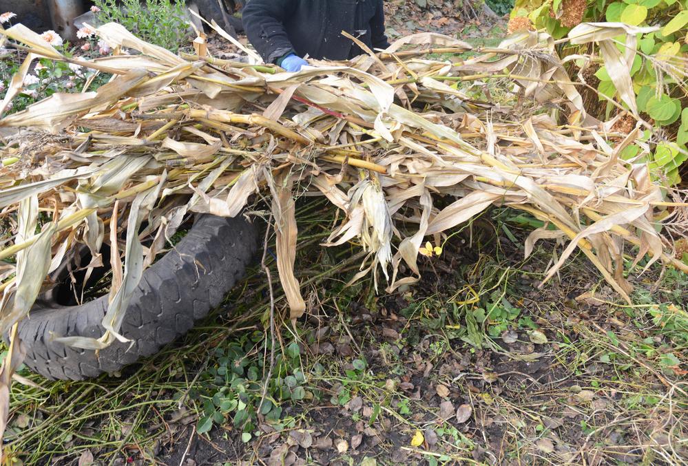 Укрытие на зиму с помощью шины и сухой кукурузы