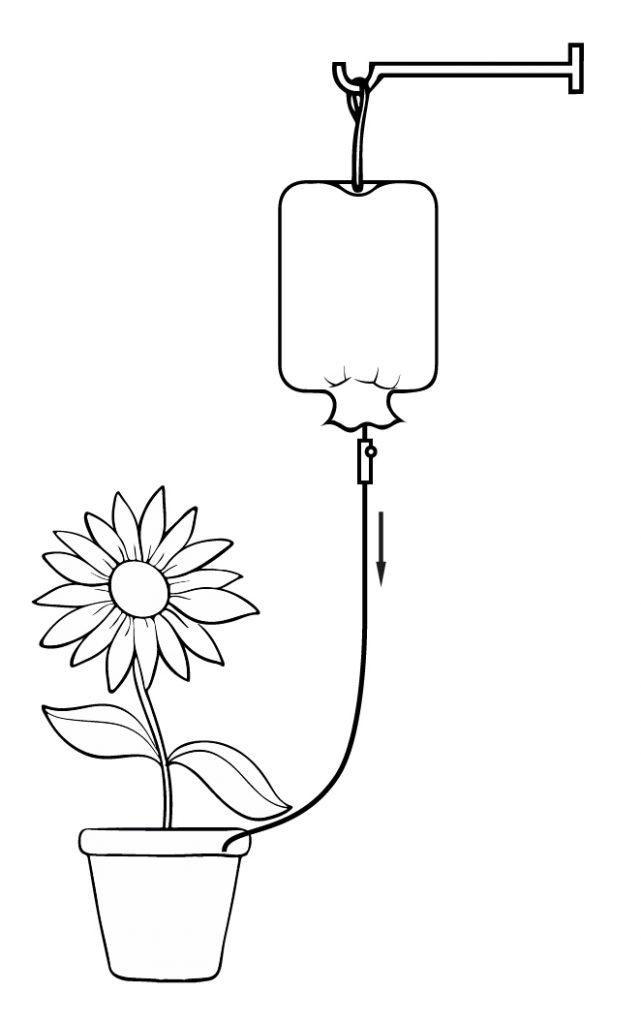 Организация полива комнатных растений