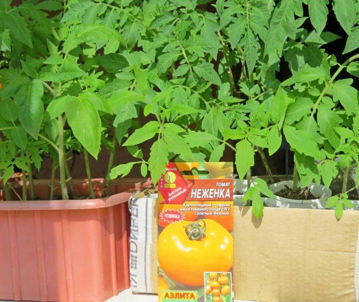 производители семян