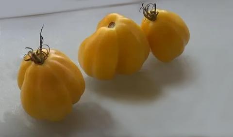 сорт томатов 2020 года
