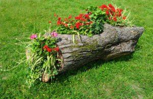 Вазон из старого дерева