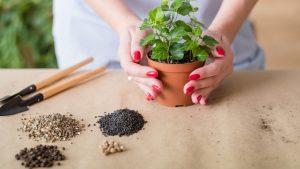 Почвосмеси для комнатных растений