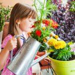 Балконные цветы - радость