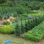 Грядки с овощами