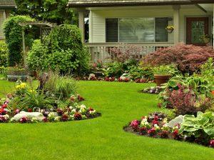 Совместимость декоративных кустарников
