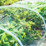 Грядки клубники под сеткой