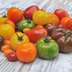 цветные помидоры