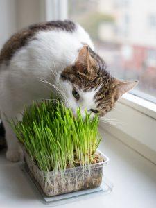 Емкость для травы должна быть не очень высокой