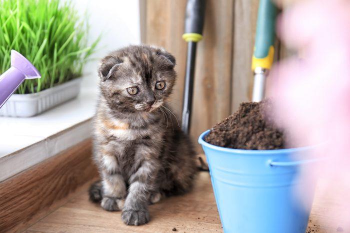 Грунт для травы можно использовать различный: «универсальный для растений», вермикулит, опилки и даже марлю