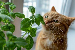Предоставьте для усатого выбор из различных растений
