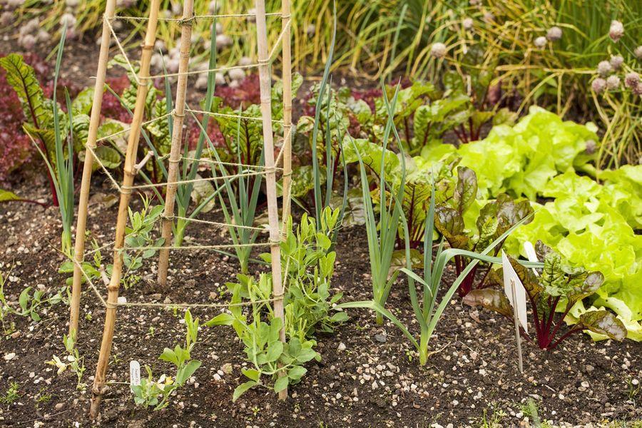 с чем посадить чеснок